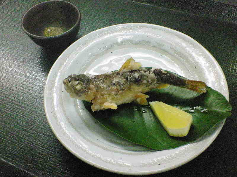 本日の釣果 山女魚1〔32  〕