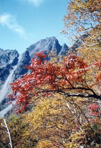 岳沢の紅葉